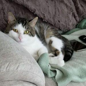 ?bust=1611502046&width=300 - Adopt a Cat