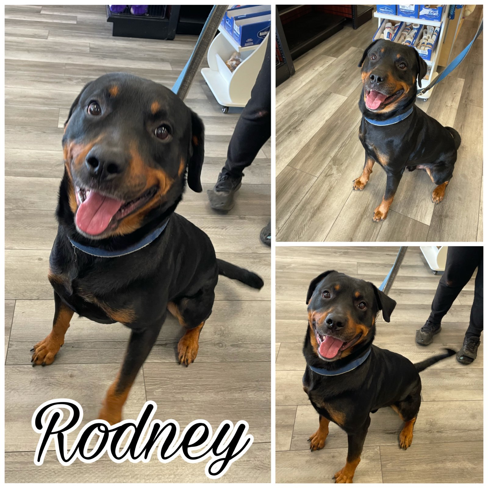 Rodney detail page