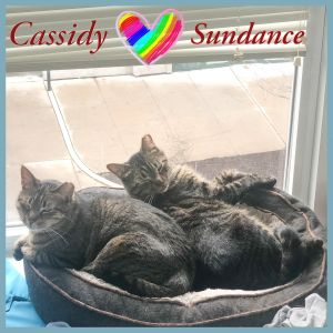 Meet darling Cassidy and Sundance- a lovely sweet bonded brother duo looking for their forever hom