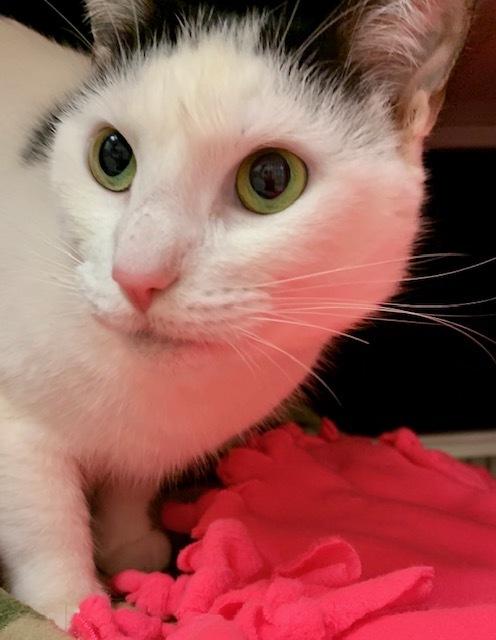 Kitty PowPow 4