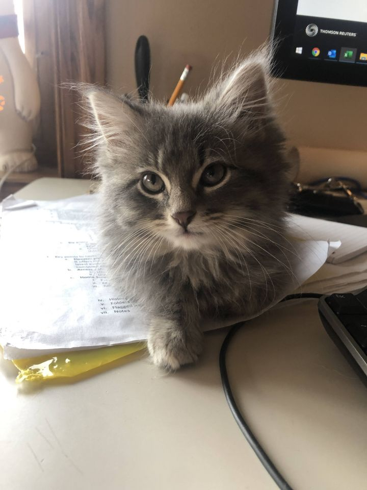 Dorothy - Not Currently Accepting New Applications (Waitlist Only) 2