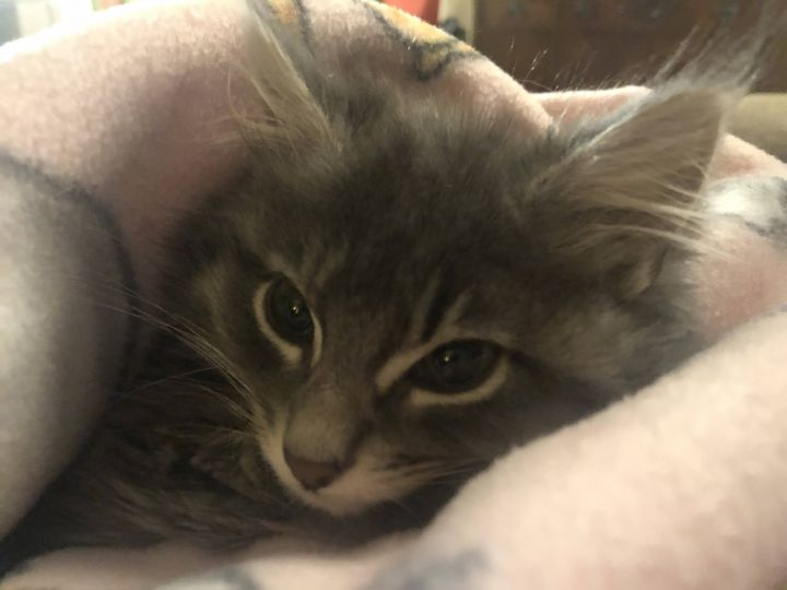 Dorothy - Not Currently Accepting New Applications (Waitlist Only) 3