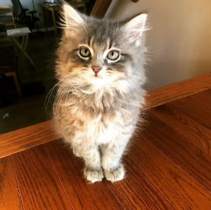 Dorothy - Not Currently Accepting New Applications (Waitlist Only)