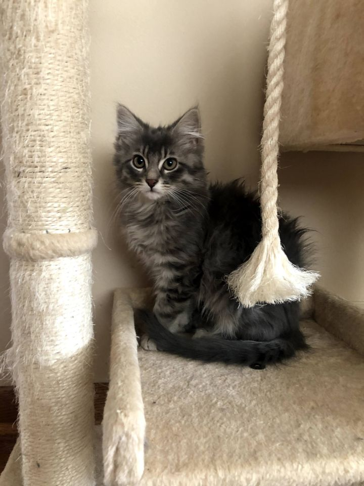 Dorothy - Not Currently Accepting New Applications (Waitlist Only) 4
