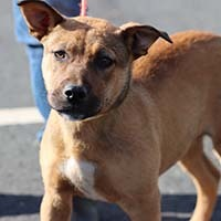 Cleo, an adopted Shepherd Mix in Chantilly, VA
