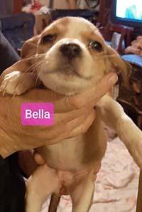 Trailer Park Bella 1