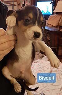 Trailer Park Bisquit 1