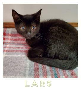 Lars 1