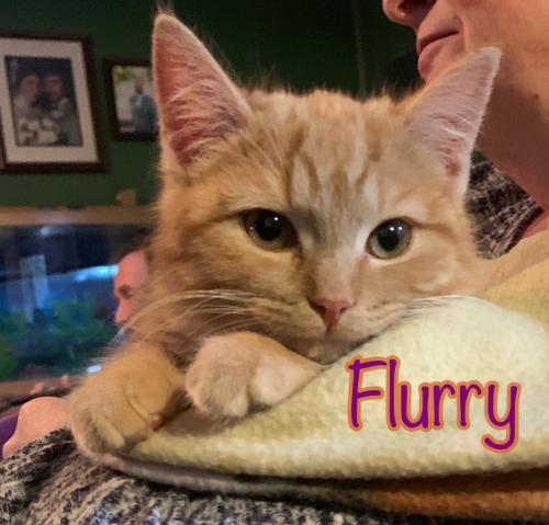 Flurry 1