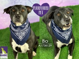 Bo is the sweetest and calmest boy Hes a slow-paced and sleepy boy but loves playtime and toys es