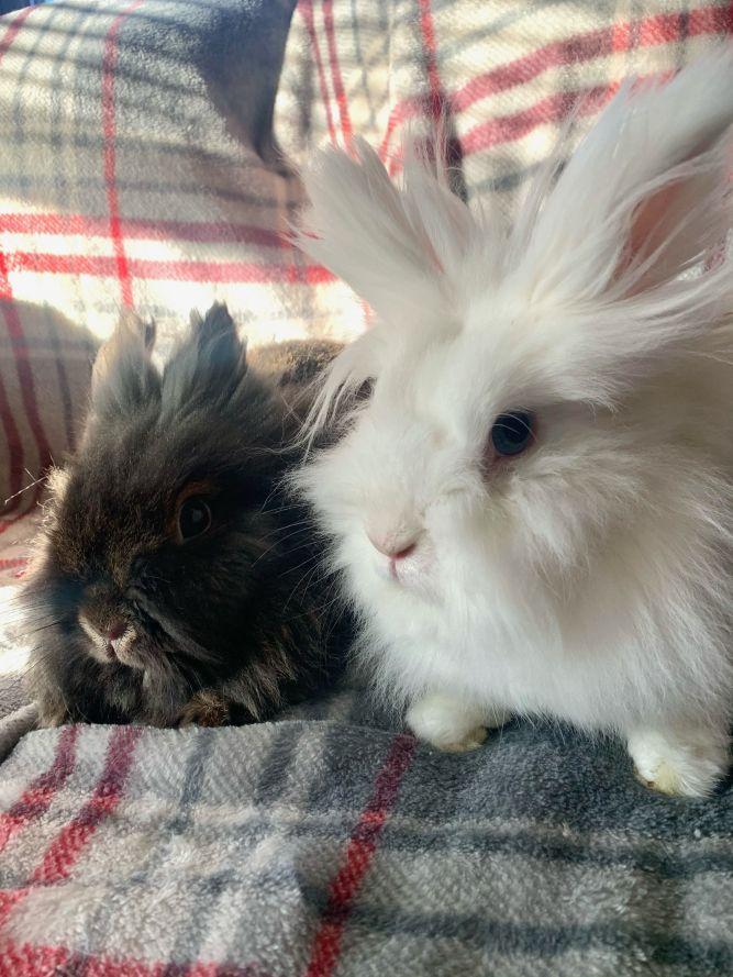 Daphne & Duke