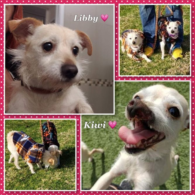 Kiwi and Libby Bonded Pair