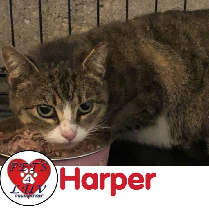 Harper 1