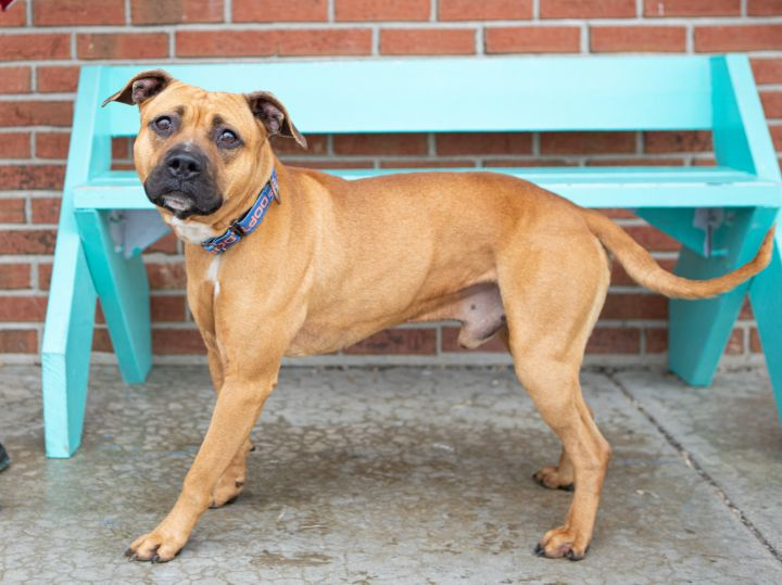 Jet, an adoptable Mixed Breed in Cape Girardeau, MO