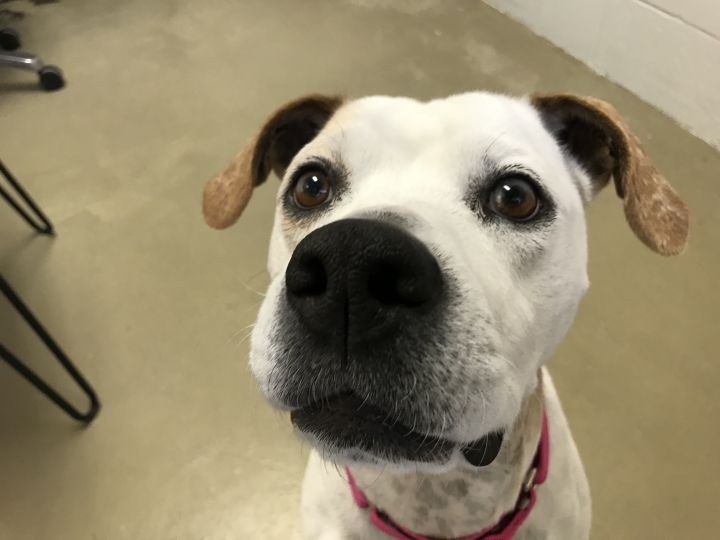 Rappy, an adoptable Terrier in Carencro, LA