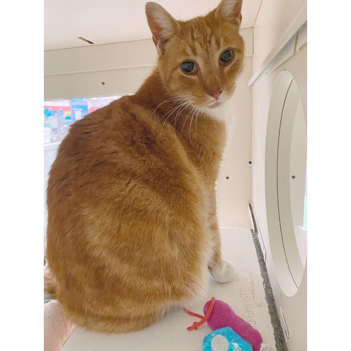 Big Ginger 3