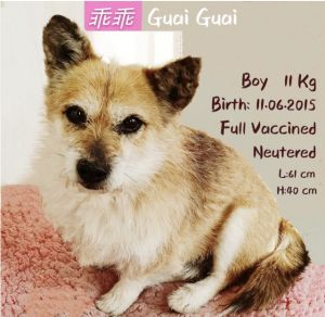 Despite his past GuaiGuai is a chill sweet and mellow dog Before he was rescued he was put in a