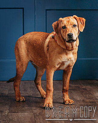 hound puppies !!