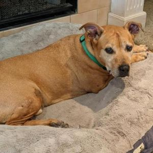 Hardy has been a beloved family pet and sadly after his owner passed away he found himself looking f