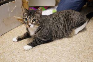 Annie -Adoption Pending!