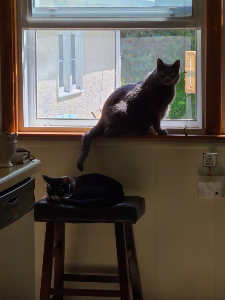 Bella & 6ie (Bonded Pair) 2