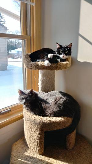 Bella & 6ie (Bonded Pair)