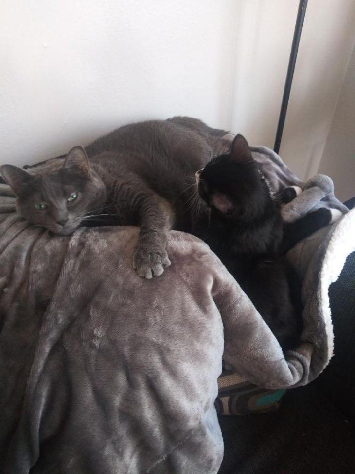 Bella & 6ie (Bonded Pair) 5