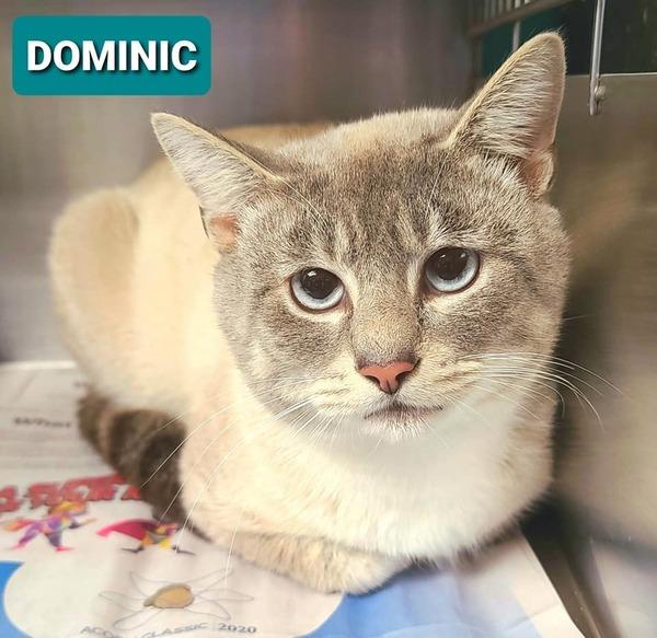 Dominic 1