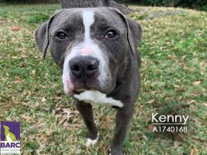 Kenny is enjoying time in foster care and is getting along great with his dog and cat foster sibling