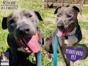 River is enjoying some time in Foster Care If you are interested in meeting this kiddo please e-ma