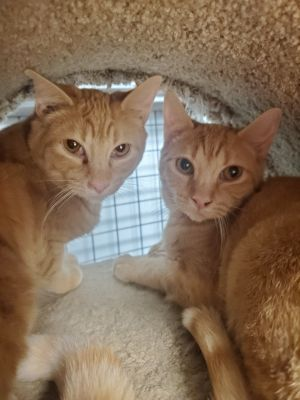 We are sisters and very timid We are a bonded pair and will need to adopted together We will need