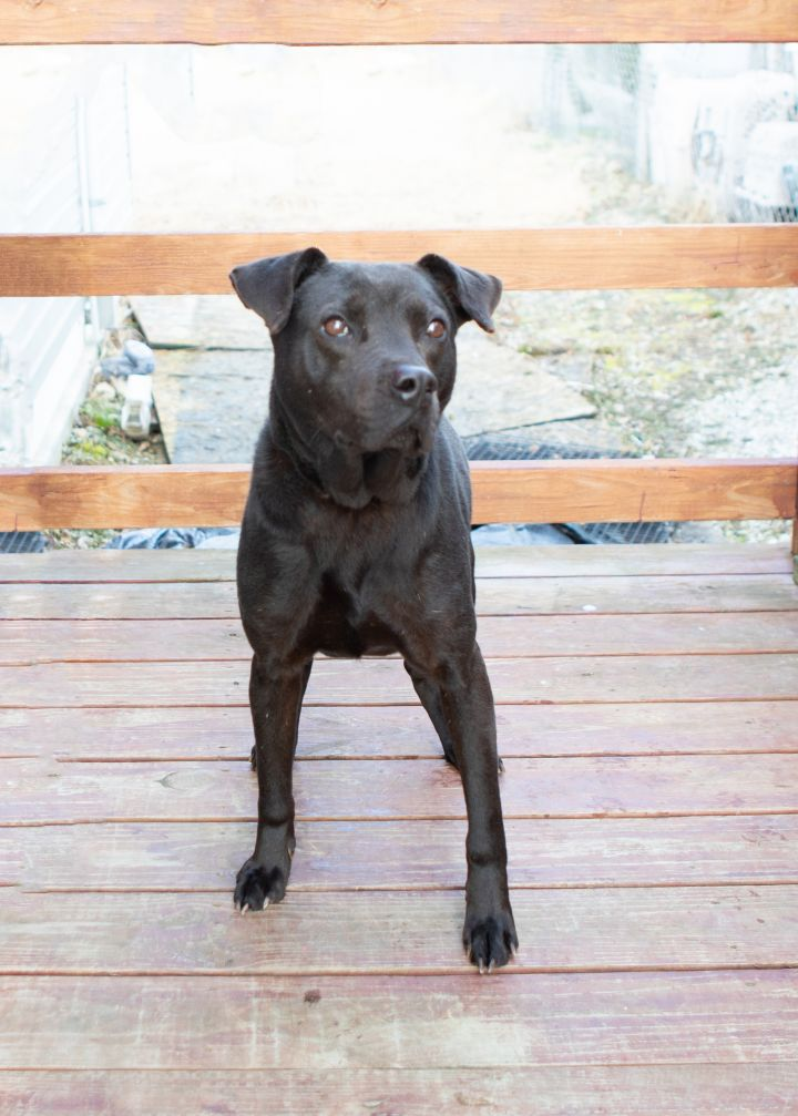 Angus, an adoptable Mixed Breed in Cape Girardeau, MO