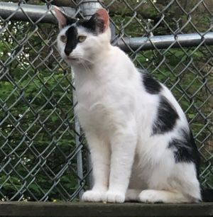 Meet Quinn He is an adorable 2 year old white and black male that was rescued from a colony in
