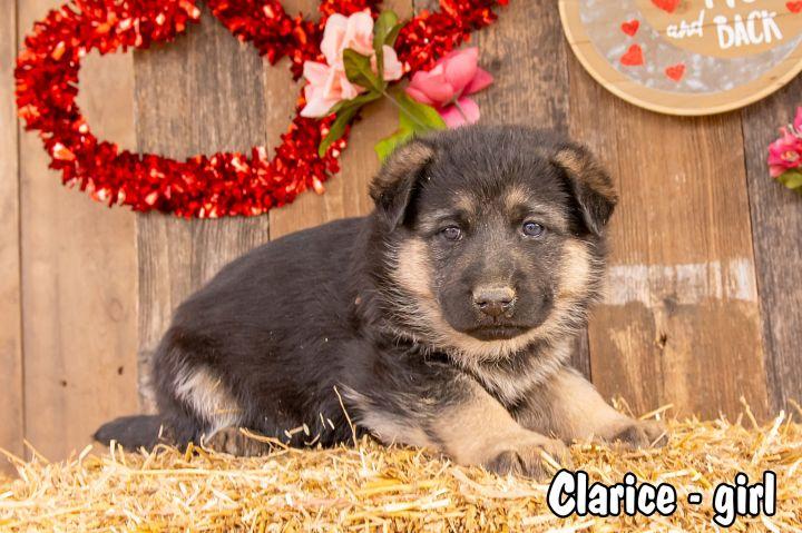 Clarice 2