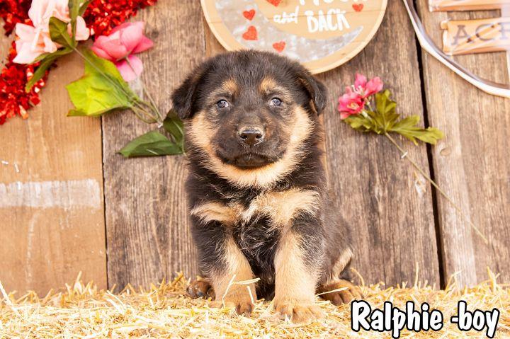 Ralphie 1