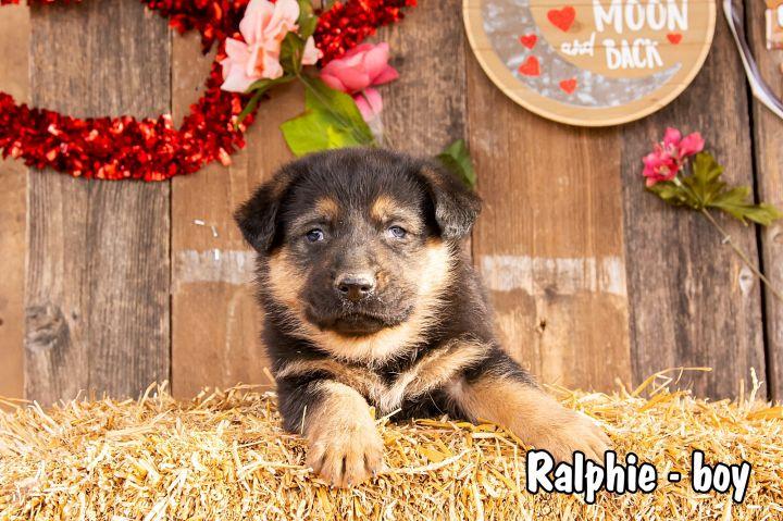 Ralphie 2