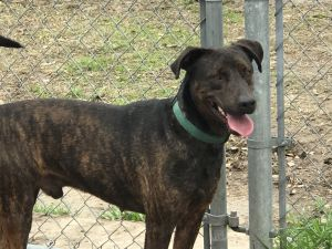 Bobby came from a high kill shelter but they kept him for nearly a year or more taking him off