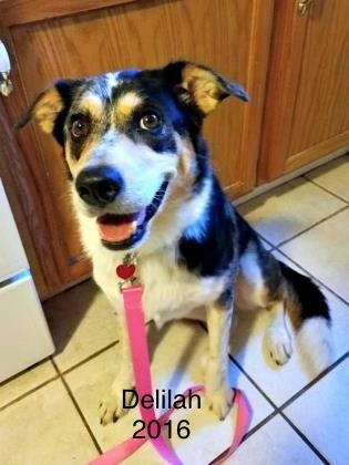 Delilah 3