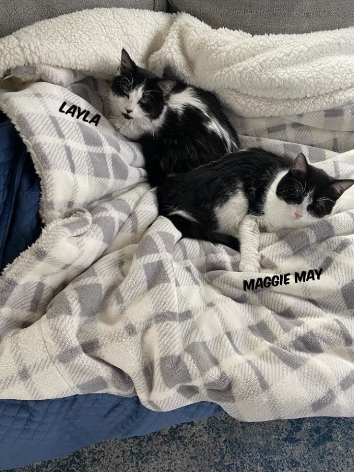 Maggie May & Layla (Eve kittens) 1