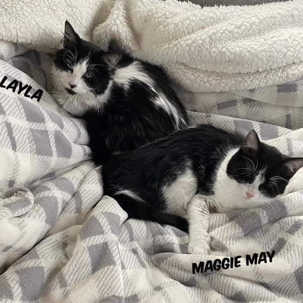 Maggie May & Layla (Eve kittens)
