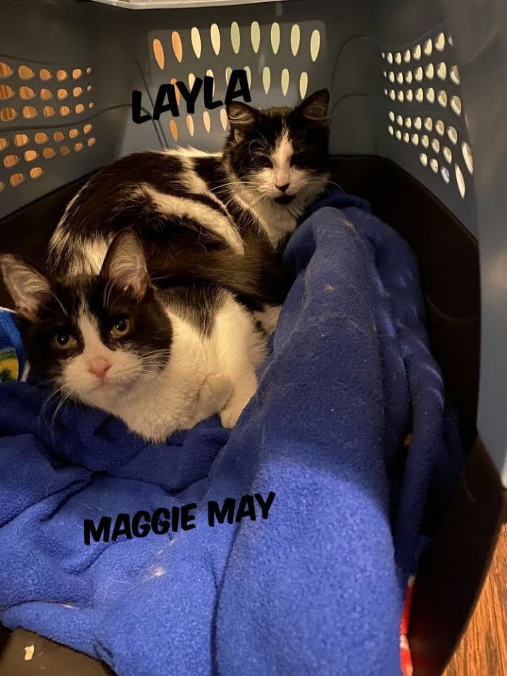 Maggie May & Layla (Eve kittens) 5