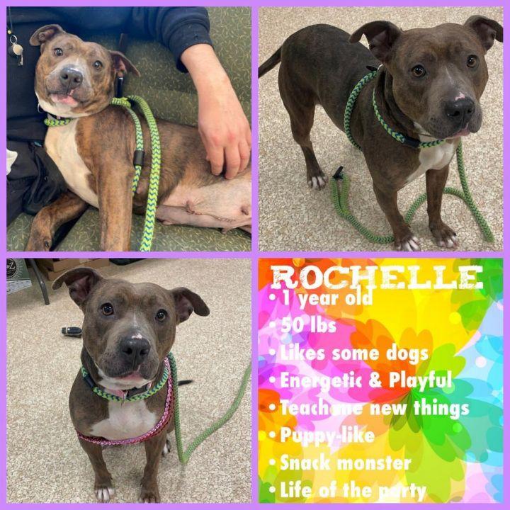 Rochelle 5