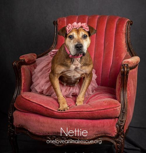 Nettie 2