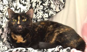 Annie is a 1 year old Tortoiseshell cat with a very calm laid back personality