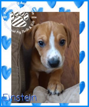 Einstein ADOPTION PENDING