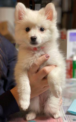 Laila-Adopted!