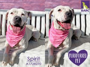 Spirit is enjoying some time in Foster Care If you are interested in meeting this kiddo please e-m