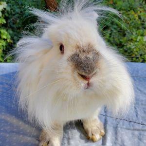 KROLIK is the sweetest bunny