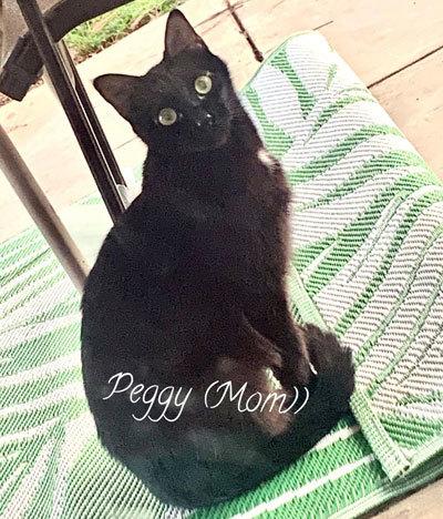 Peggy 2