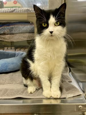 Beautiful Tinsel she has whiskers for milesa sweet girl approximately 4-6 years old shes loving